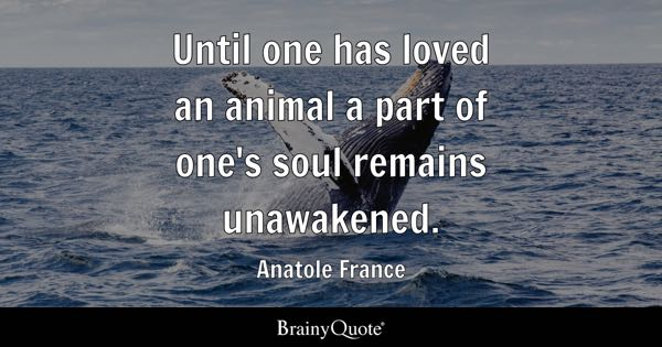 Until one has loved an animal a part of one's soul remains unawakened. - Anatole France