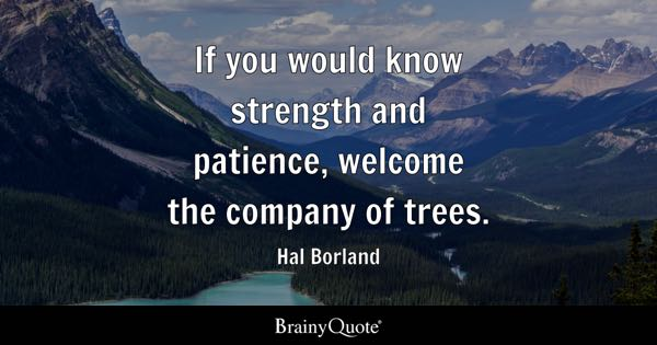 If you would know strength and patience, welcome the company of trees. - Hal Borland