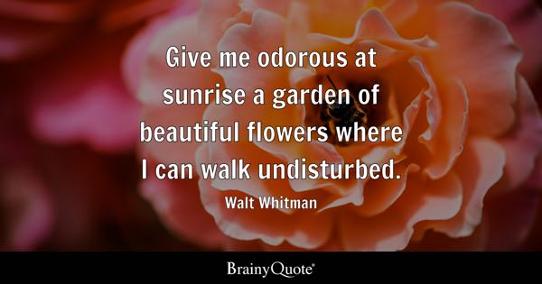 Give me odorous at sunrise a garden of beautiful flowers where I can walk undisturbed. - Walt Whitman