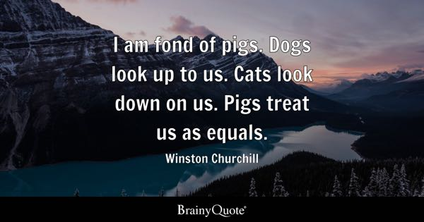 I am fond of pigs. Dogs look up to us. Cats look down on us. Pigs treat us as equals. - Winston Churchill